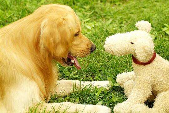 维生素过量对狗狗有什么危害